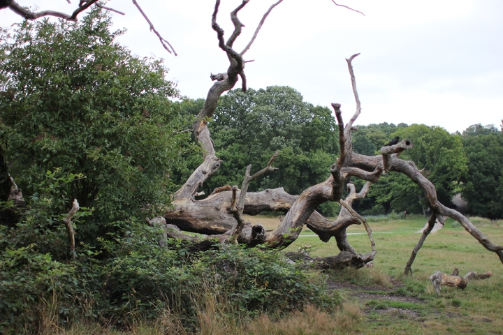 Afternoon in Hampstead Heath, blameitonart (10)