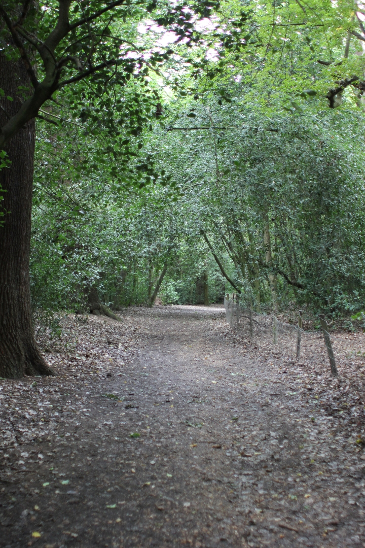Afternoon in Hampstead Heath, blameitonart (11)
