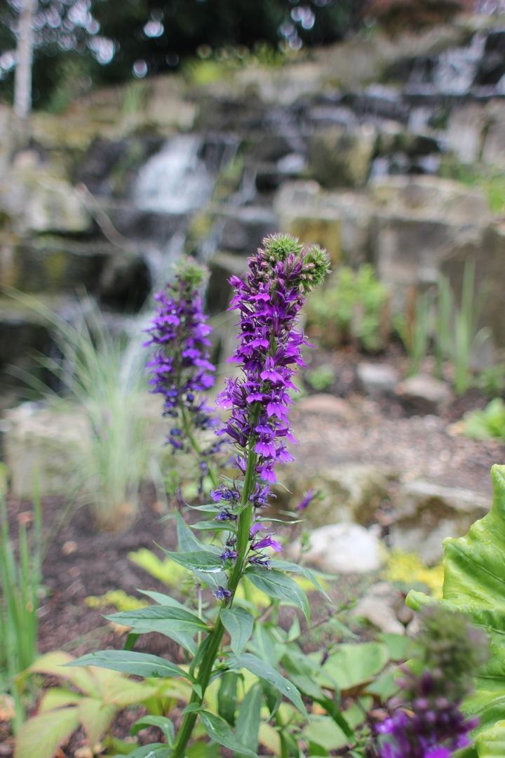 Floral strolls through Regents Park, blameitonart (10)