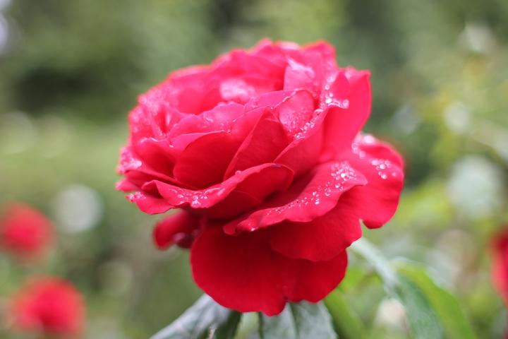Floral strolls through Regents Park, blameitonart (3)