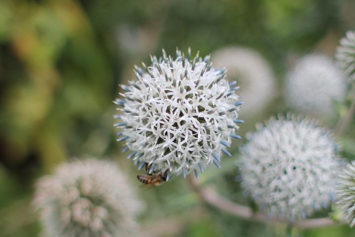 Floral strolls through Regents Park, blameitonart (4)