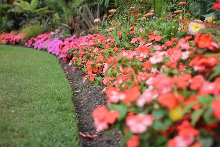 Floral strolls through Regents Park, blameitonart (7)
