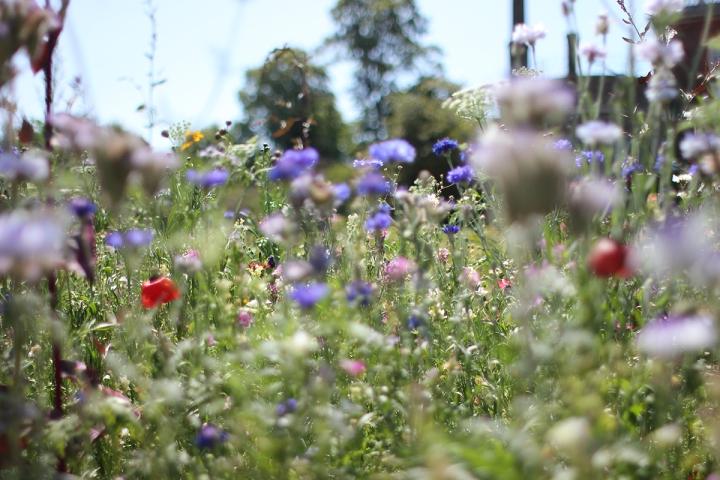 High walks in Greenwich park, blameitonart (12)